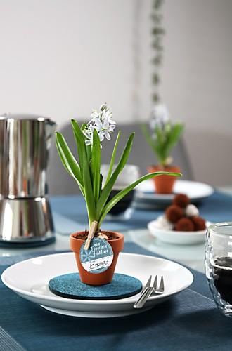 Blaustern in Tontöpfen Tischdeko Impression 1