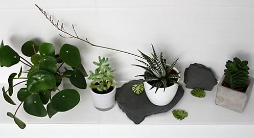 Pilea Grünpflanzen auf Schieferplatten