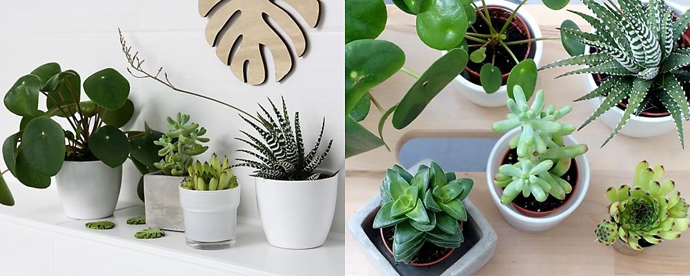 Jungle Look mit Grünpflanzen Badezimmer